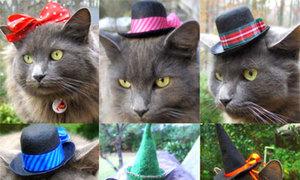 Bộ sưu tập mũ cho mèo