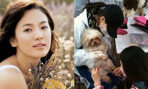 Song Hye Kyo đi chăm sóc cún