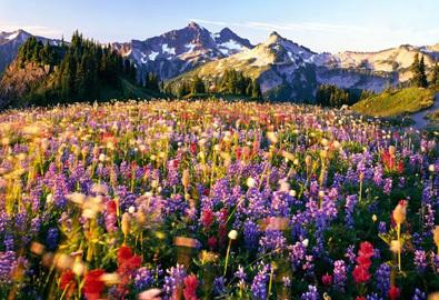 Lạc bước vào những thiên đường hoa đầy lãng mạn