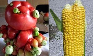 Thực vật quái dị ở Fukushima