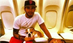 Cún cưng của Hamilton đi máy bay hạng nhất