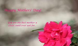 Hoa hồng không dành cho mẹ