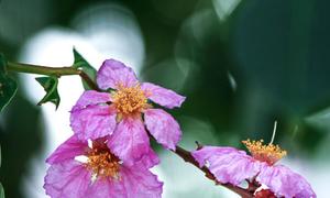 Tháng 5, nỗi nhớ và những cơn mưa đầu hạ