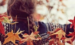 Mùa thu chỉ còn trong ký ức