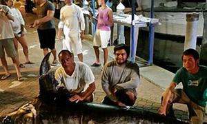 Cá kiếm nặng hơn 300 kg