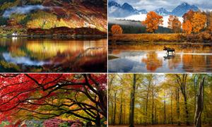 Cảnh sắc mùa thu trên thế giới đẹp hút hồn