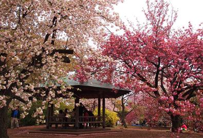 Shinjuku Gyoen - công viên tuyệt đẹp ở Tokyo