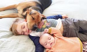 Ảnh tư thế ngủ đáng yêu của bé và chú chó Theo