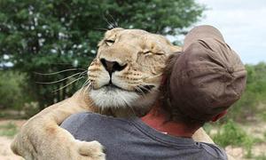 Tình bạn thân thiết giữa người và sư tử