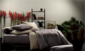 Tô điểm sắc màu phòng ngủ với Lotus