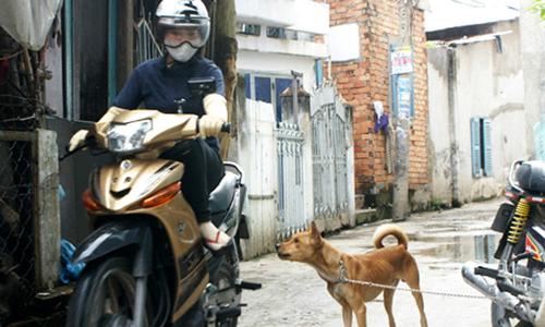 Gần 3.000 người ở TP HCM bị chó mèo cắn mỗi tháng