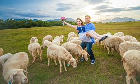 Trào lưu chụp ảnh cưới độc lạ cùng đàn cừu