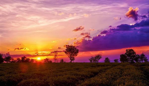 Ngắm cánh đồi chè mờ ảo, bồng bềnh trong ánh chiều hoàng hôn buông xuống thật đẹp. Ảnh: Nguyen Vinh.