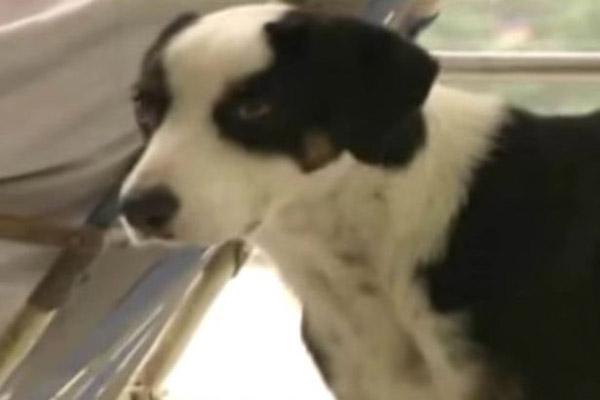 Con chó được người trong bệnh viện đặt tên là Pirata. Ảnh: