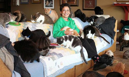 Người phụ nữ sống chung nhà với 1.100 con mèo