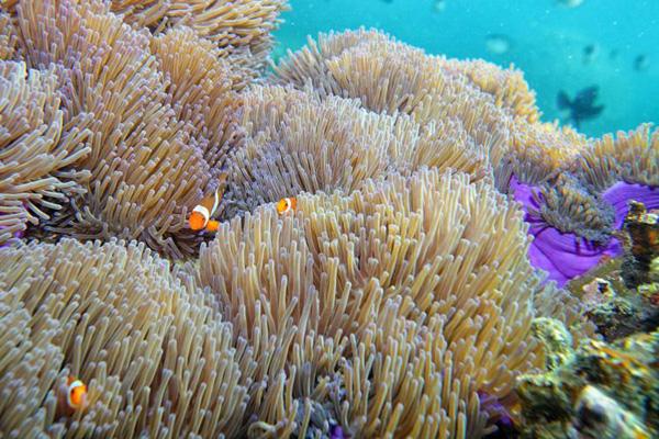 Lặn biển để khám bức tranh muôn màu muôn vẻ dưới đáy đại dương.