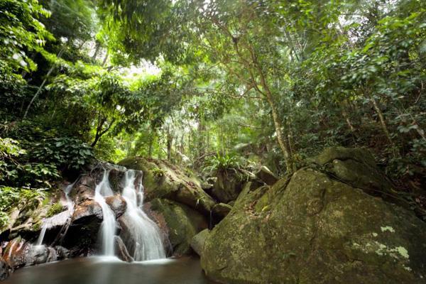 Những dòng thác mềm mại trong rừng ở đảo Tioman.