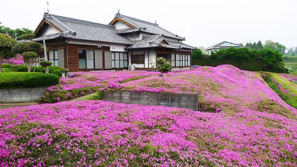 Một ngày nọ, ông Kuroki phát hiện thấy một bông hoa chi anh màu hồng trong vườn nhà và cho rằng vẻ đẹp của hoa không chỉ có thể được cảm nhận bằng mắt mà còn bằng mùi hương. Nếu có thể trồng được vườn hoa đẹp, không chỉ vợ ông được sống trong khoảng không gian ngập hương thơm mà mọi người cùng có thể đến chiêm ngưỡng, từ đó khiến bà cười nói vui vẻ trở lại.