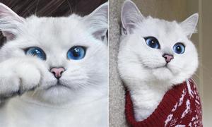Chú mèo mắt xanh 'đốn tim' fan trên mạng xã hội