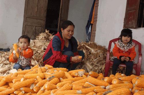Để nuôi hai con, chị Thủy làm thuê, chăn nuôi và đi nhặt phế liệu.