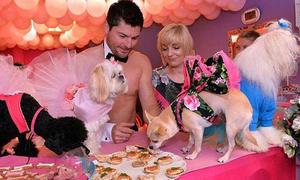 Chi 6.000 bảng tổ chức tiệc chia tay đời độc thân cho chó