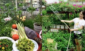 Vườn rau nhìn là mê của các nàng dâu Việt khắp thế giới