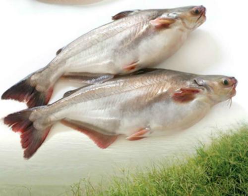 chon-dung-loai-collagen-tot-cho-da-2