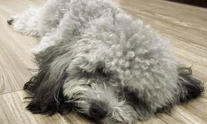 Cún cưng màu hiếm của Á hậu Tú Anh
