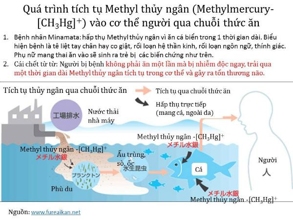 4-thao-duoc-thai-doc-thuy-ngan-hang-dau-1