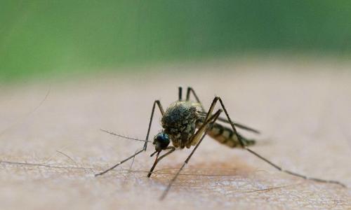 Lý do vì sao bạn hay bị muỗi đốt hơn người khác