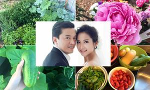Vợ 9x của Lam Trường học làm vườn để có rau sạch cho chồng