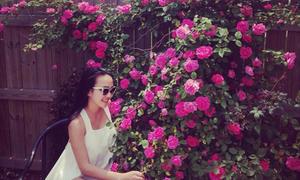 Vườn hồng rực rỡ trong nắng hè của mẹ Việt ở Mỹ