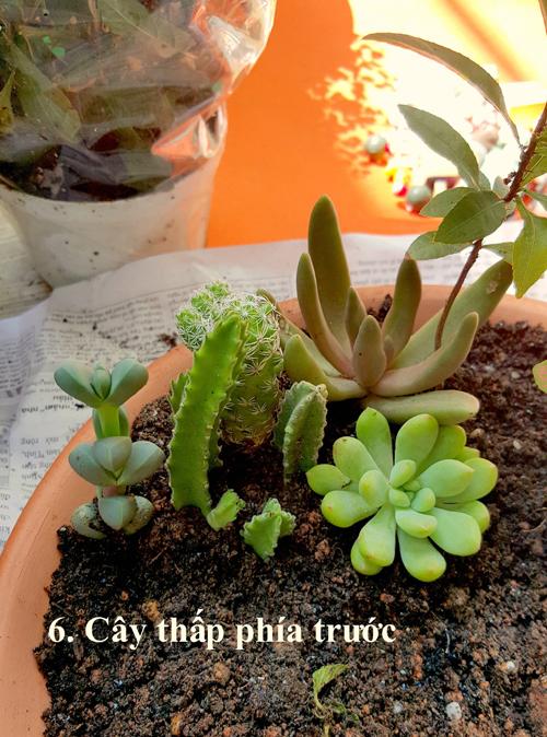 co-gai-8x-sai-gon-huong-dan-lam-vuon-cay-mini-doc-dao-6