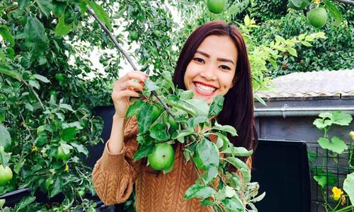 Vườn nông sản sạch 'nhìn phát thèm' của Việt kiều Pháp