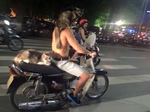 Người đàn ông được yêu thích khi chở theo 3 em mèo đi dạo phố. Ba chú mèo ngồi ngoan ngoãn trên xe và trên vai của anh chủ mà không sợ người lạ. Tuy nhiên, một số bình luận lại tỏ ra lo lắng vì người điều khiển xe không đội mũ bảo hiển
