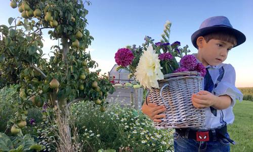 Khu vườn 'đủ thứ cây' tuyệt đẹp của mẹ Việt ở Hà Lan