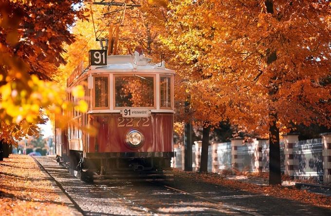 Bộ ảnh mùa thu 'trải thảm vàng' trên khắp thế giới
