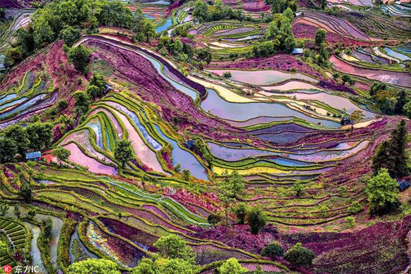 Đây là khu vực có lịch sử lên tới 1.200 năm. Vùng trung tâm của ruộng bậc thang nằm ở Nguyên Dương. Khu vực này có 1.000.000 ha và khu vực được công nhận là di sản thế giới của UNESCO có diện tích 16.603 ha.
