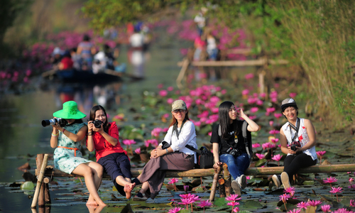 Hoa súng chùa Hương khoe sắc hồng dưới nắng thu