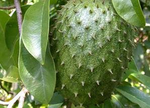 loai-qua-nao-chua-nhieu-vitamin-c-nhat-10