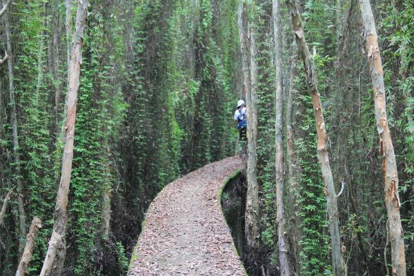 Con đường xuyên rừng cực đẹp và thơ mộng ở Tân Lập. Ảnh: Vĩnh Hy.