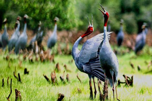 Choáng ngợp trước vũ điệu của các loài chim. Ảnh: carabet.