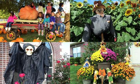 Mẹ Việt kiều gợi ý 'hô biến' những khu vườn đậm chất Halloween