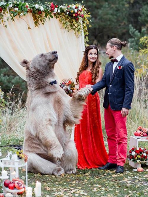 [Caption]Chú gấu Stepan được phát hiện bởi các thợ săn trong rừng khi chỉ mời ba tháng tuổi, một cặp vợ chồng người Nga Svetlana và Yuriy Panteleenko đã nuôi dưỡng chú. Năm nay Stepan đã 23 tuổi, nặng 133kg, cao 2m.