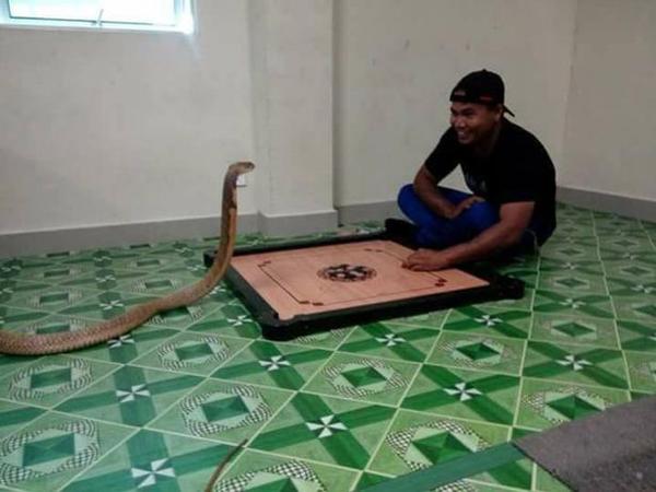 Tình yêu đích thực là có thật. Người đàn ông này tin rằng ban gái mình đã đầu thai thành con rắn hổ mang này sau khi cô ấy qua đời mấy năm trước. Anh ta nhận thấy có sự giống nhau giữa con vật với người phụ nữ mình yêu. Ngày nào anh ta cũng dành thời gian ở bên trò chuyện chơi đùa với con vật, Worranan viết.