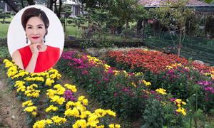 Sắc hoa xuân trong biệt thự nhà vườn của Mỹ Linh