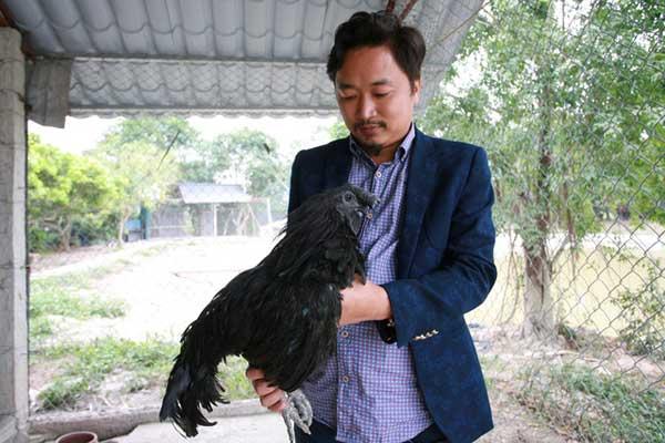 Anh Trần Nhữ Giáp với chú gà đen Indo có giá đắt nhất trên thị trường hiện nay.