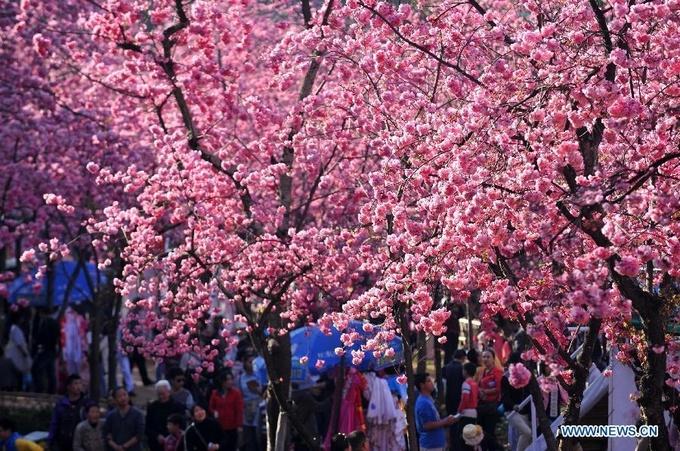 Hoa đào nở rực rỡ khắp Trung Quốc trong tiết trời xuân
