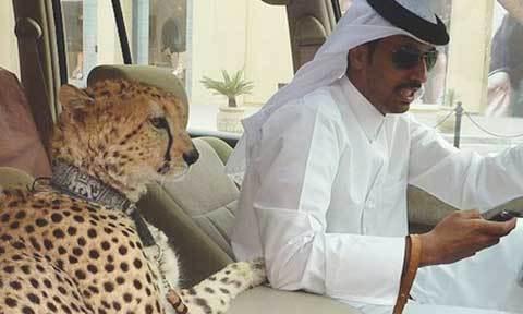 Đến Dubai để tận mắt chứng kiến những thứ xa hoa đến điên rồ