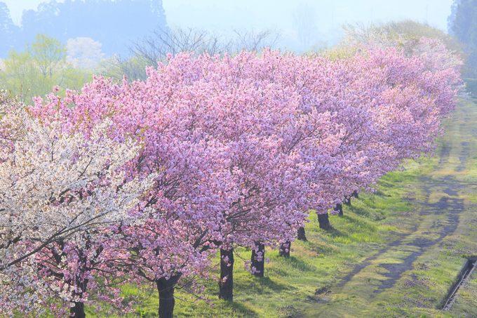 Những điểm đến đẹp tháng 4 thôi thúc dân du lịch